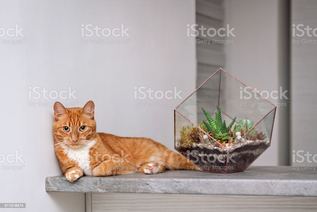 glass terrarium and red cat stock photo