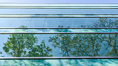 Glass window of office building, reflecting tree