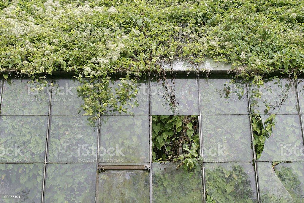 Glasshouse overgrown. royalty-free stock photo