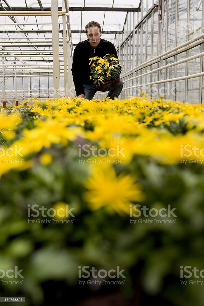 Glasshouse with flowers for selling royalty-free stock photo