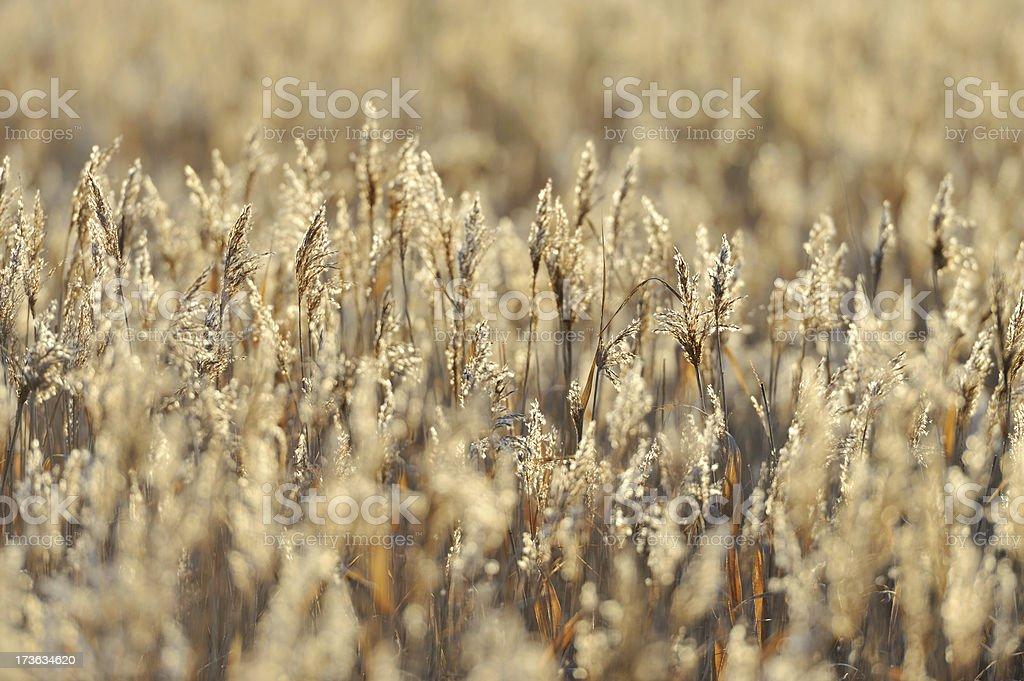 glassland stock photo