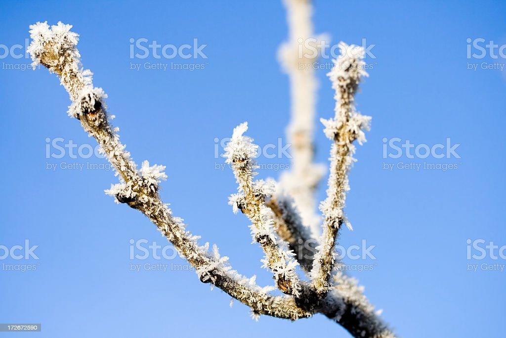 Glazed Frost stock photo