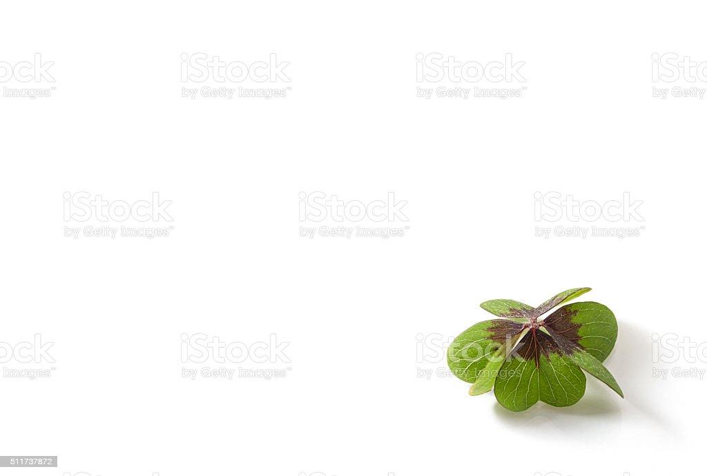 Glückskleeblatt stock photo
