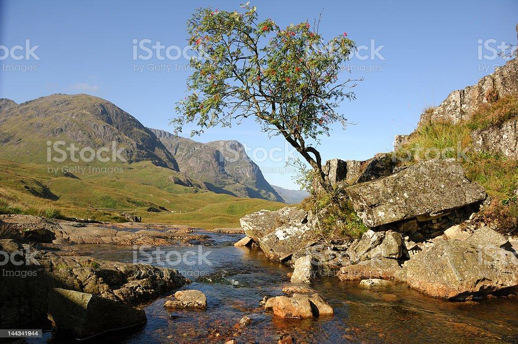 Glencoe rowan tree stock photo