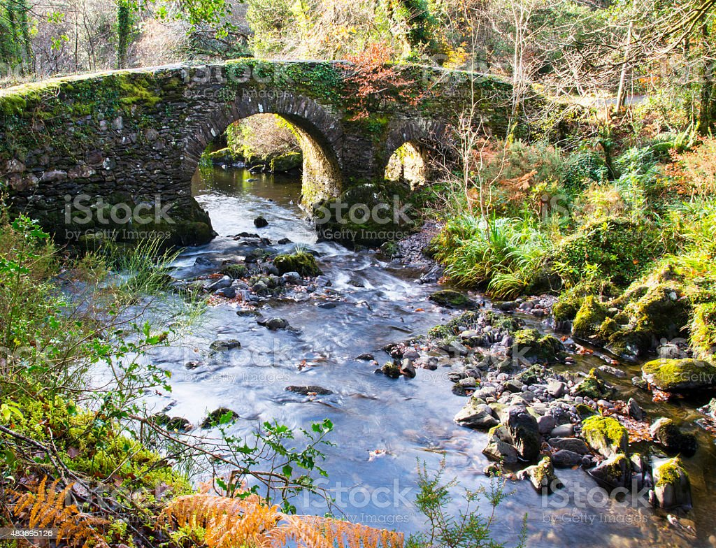 Glengariff Woods, Co. Cork Ireland stock photo