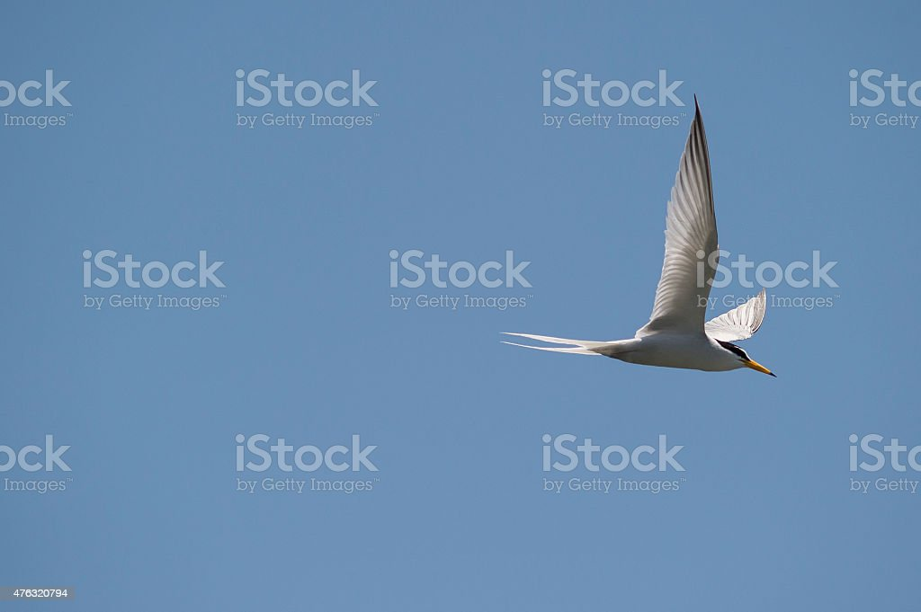 Glide royalty-free stock photo