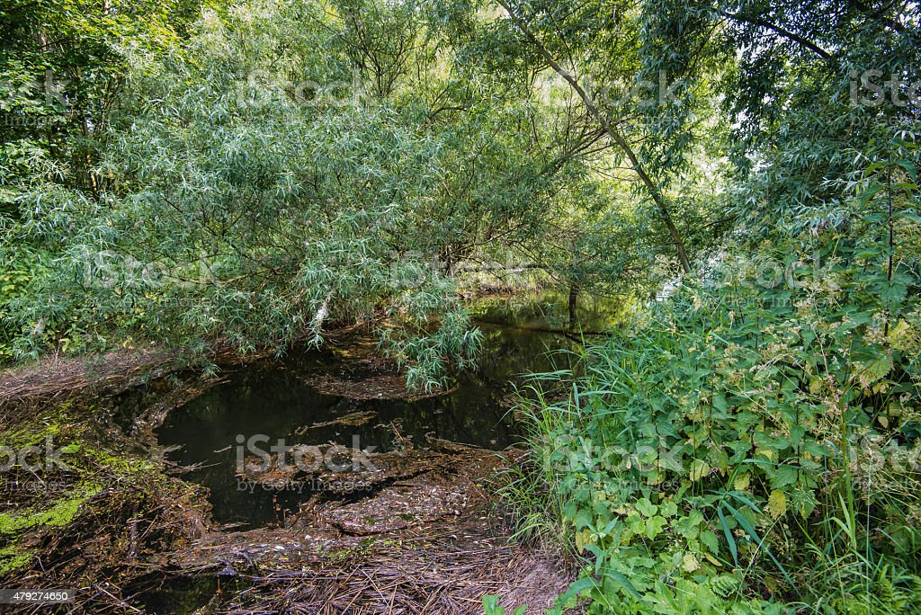 Glimpse into a nature reserve with a narrow creek stock photo