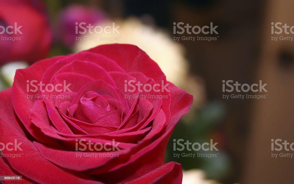 Aperçu de la rose photo libre de droits