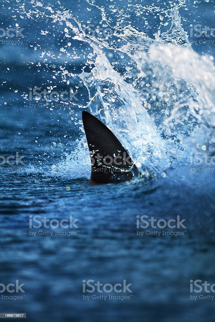 Glimpse of big shark fin in splashing water stock photo