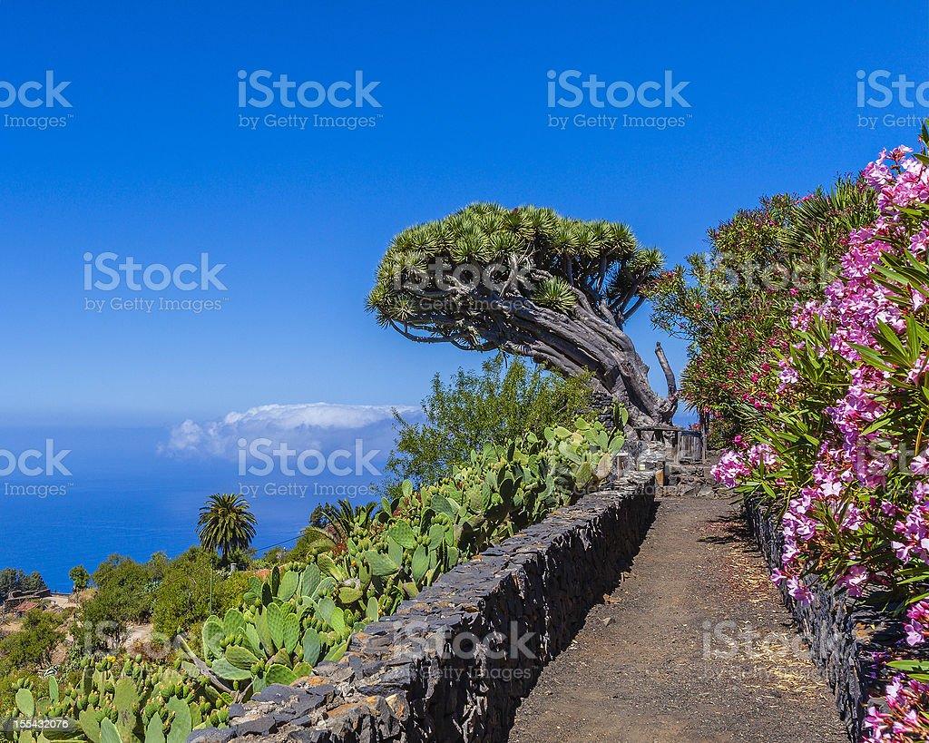 Glimpse of La Palma, Canary Islands royalty-free stock photo