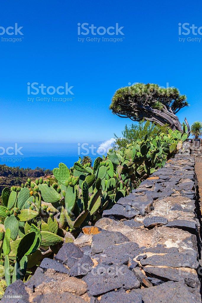 Glimpse of La Palma, Canary Islands stock photo