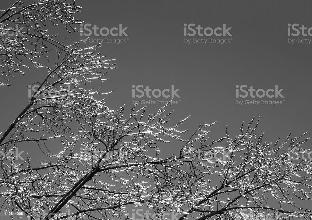 Glistening ice-covered trees stock photo