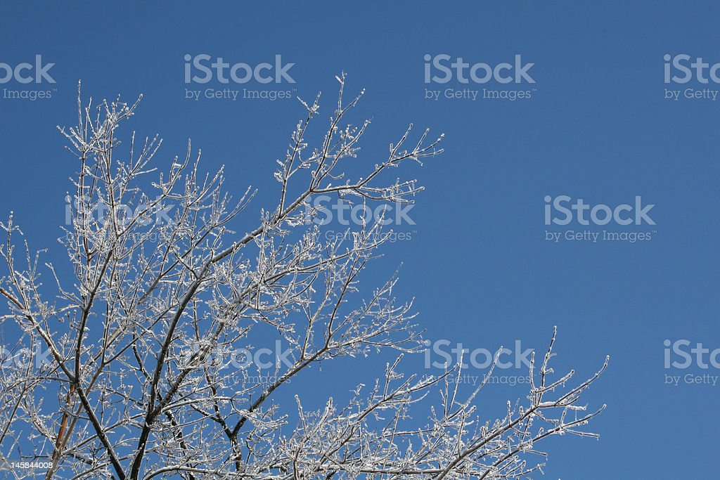 Glistening Icy Trees stock photo