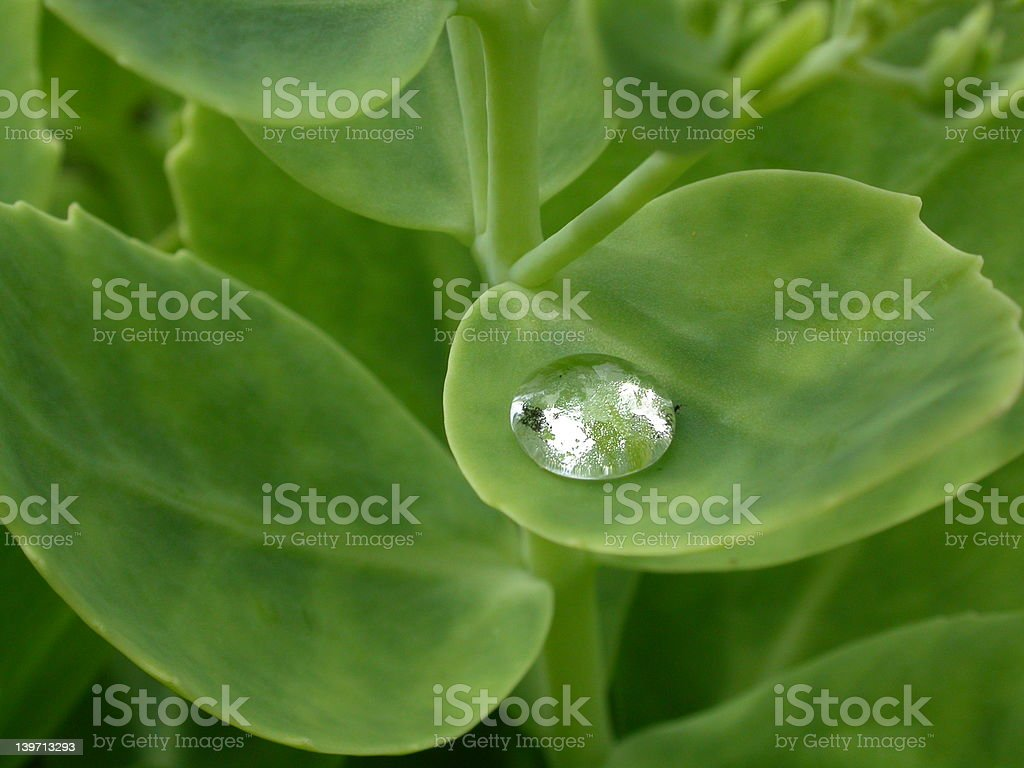 Glittering waterdrop on a leaf royalty-free stock photo