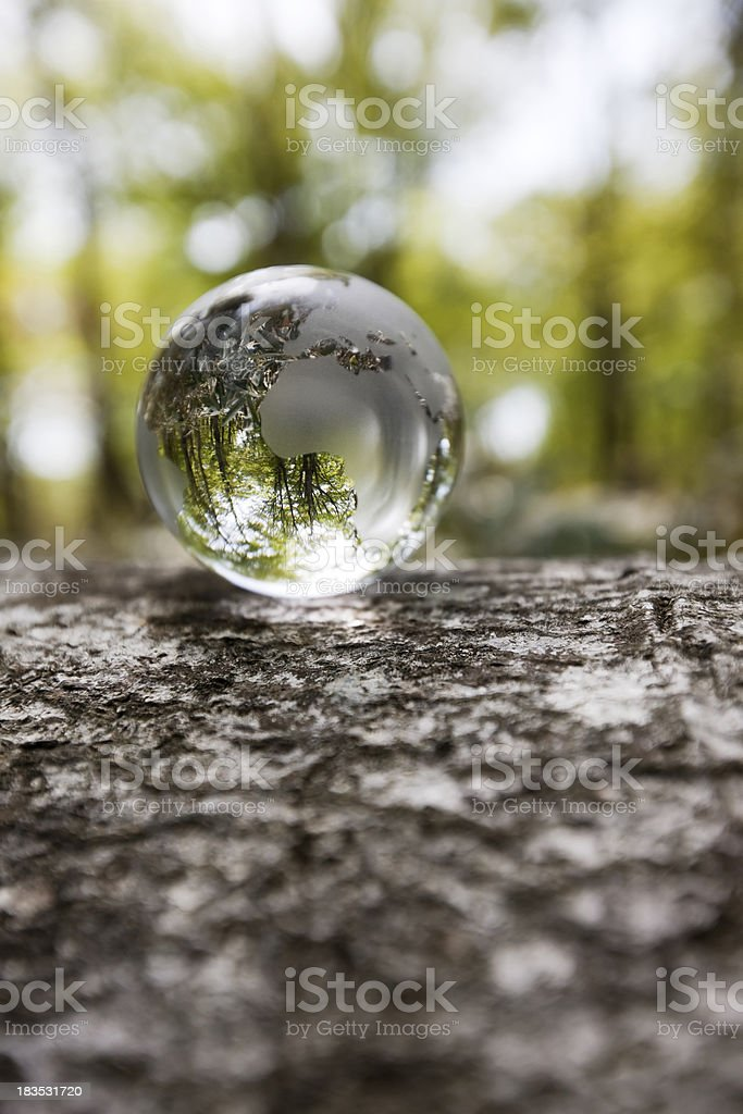 Globe in a forest royalty-free stock photo