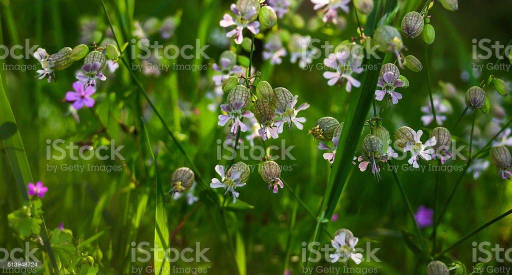 Globular  flowers stock photo