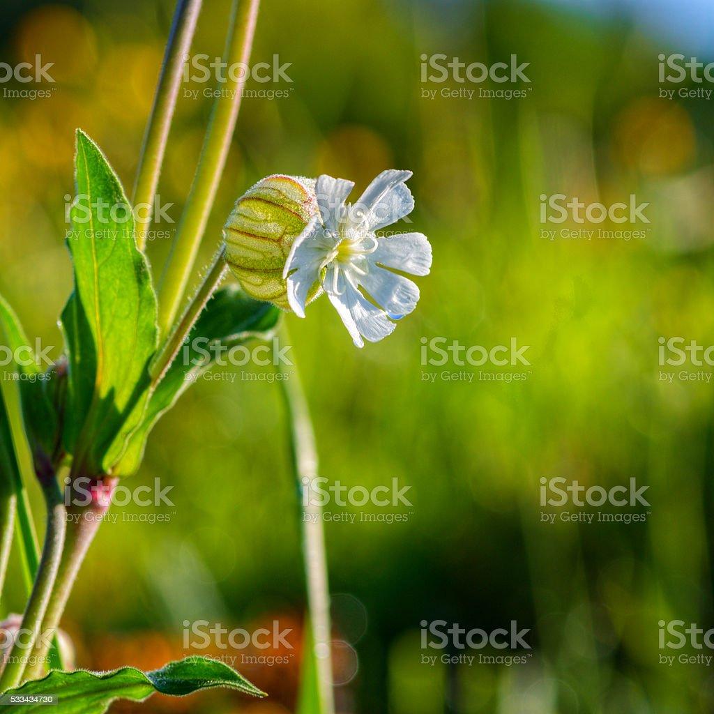 Globular White Flower stock photo