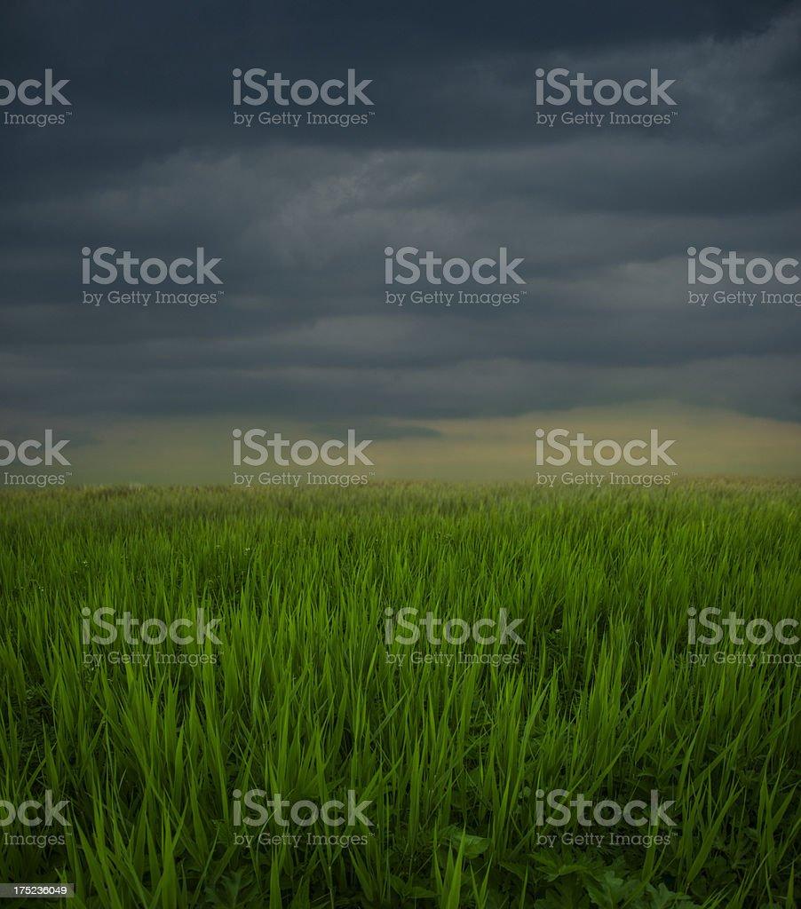 gloomy field royalty-free stock photo