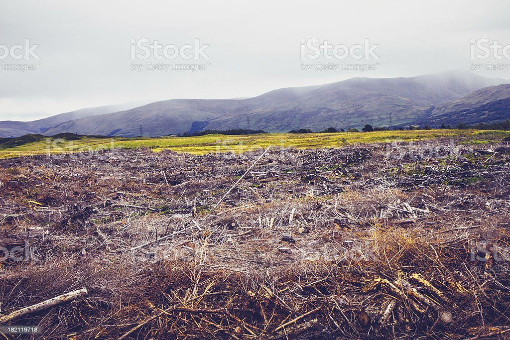 Gloomy landscape with cut down trees royalty-free stock photo