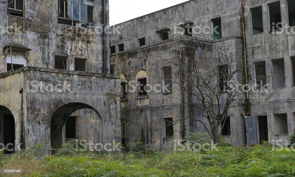 Gloomy leaveless tree in abandoned mental asylum stock photo