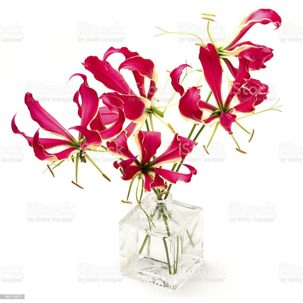 Gloriosa lily stock photo
