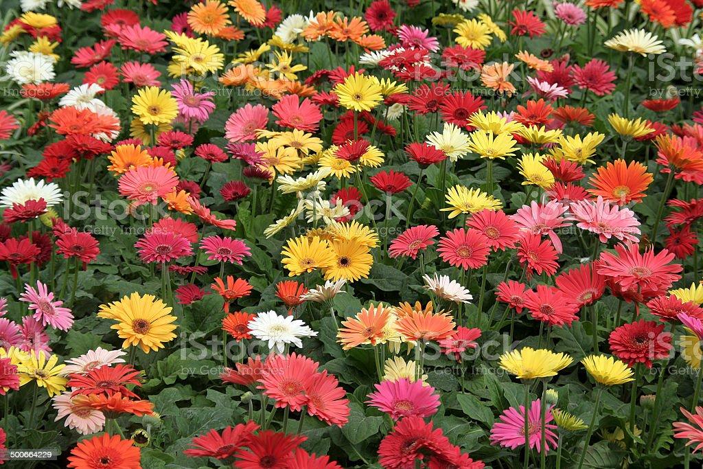 Glorious Flowers stock photo