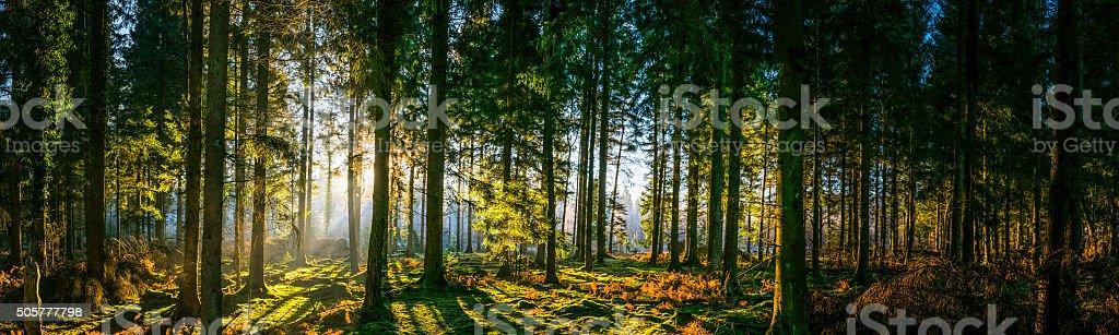 Glorious sunrise in idyllic forest glade green woodland nature panorama stock photo