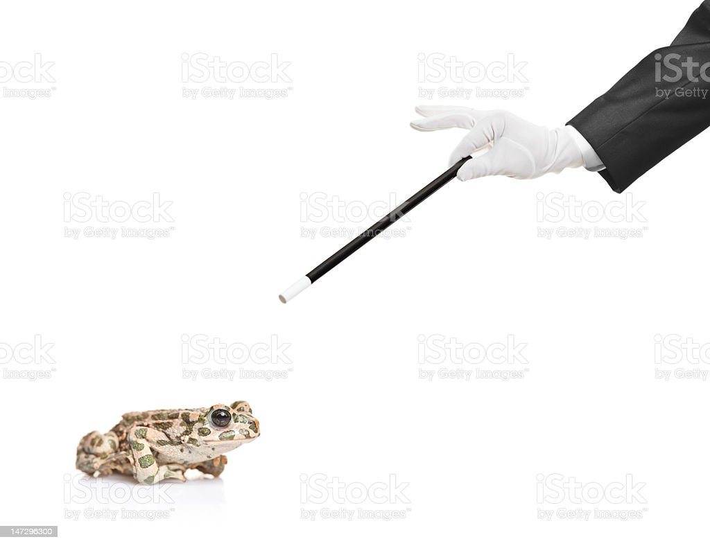 Gloved hand of a magician pointing a magic wand at a frog stock photo