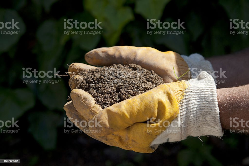 Gloved hands of a gardener holding a handful of dirt. royalty-free stock photo