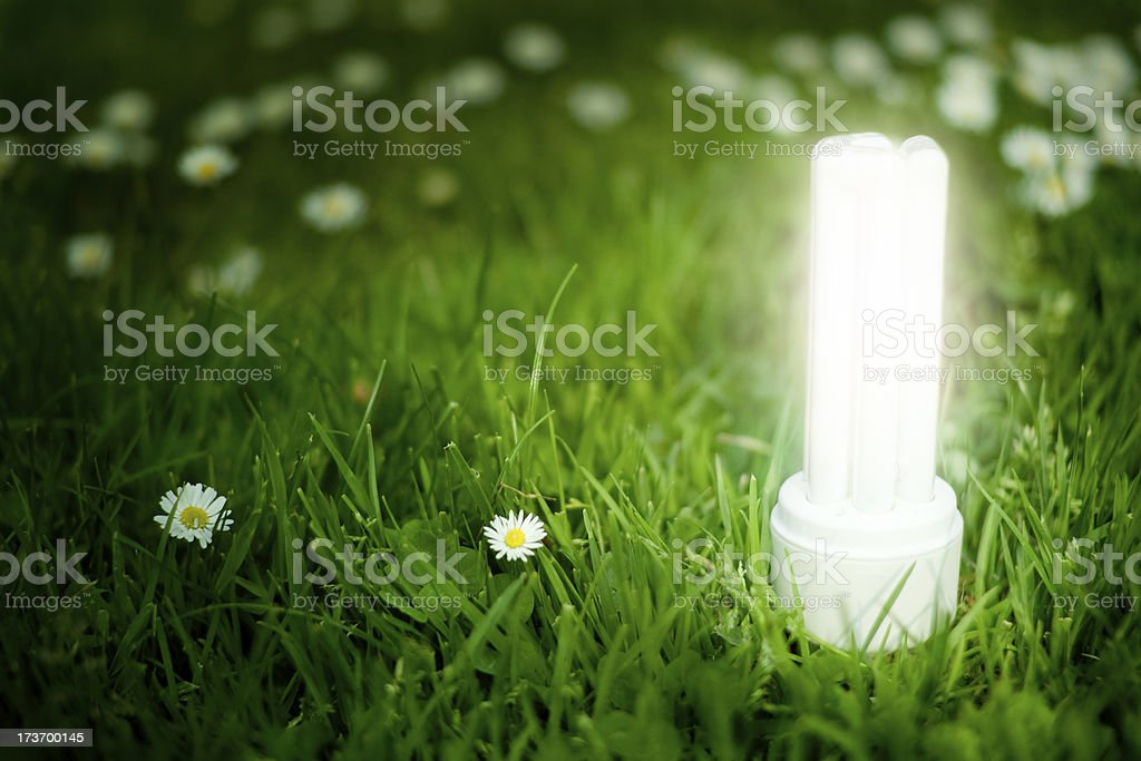 Glowing Energy Saving Lightbulb on Green Meadow. royalty-free stock photo