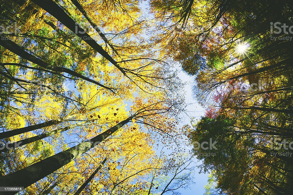 Glowing Forest stock photo