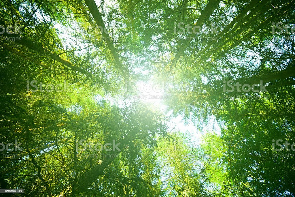 Glowing Green Forest royalty-free stock photo