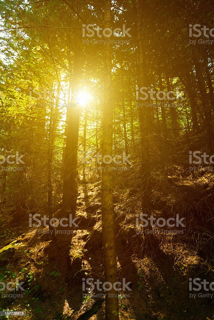 Glowing Green Forest stock photo