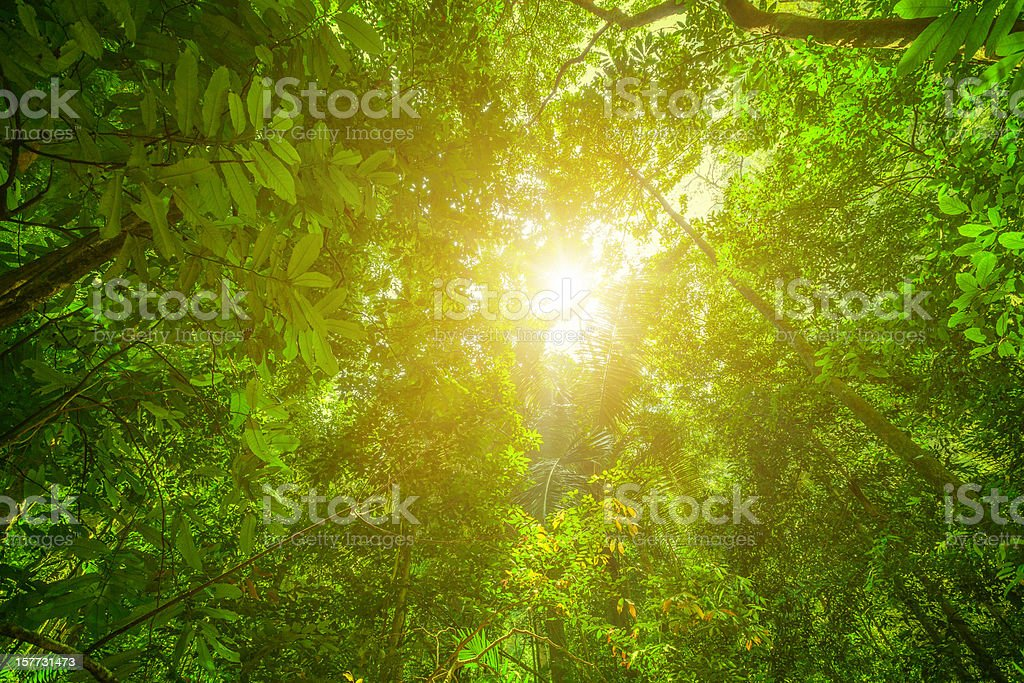 Glowing Green Rainforest royalty-free stock photo