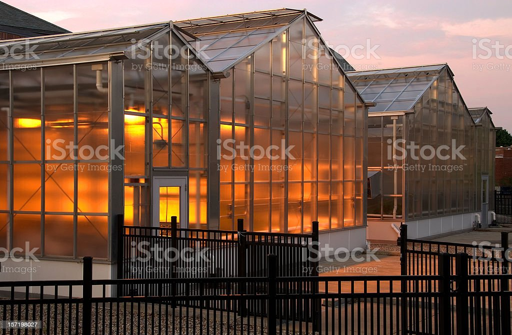 Glowing Greenhouse royalty-free stock photo