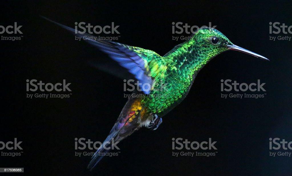 Glowing Humming Bird stock photo