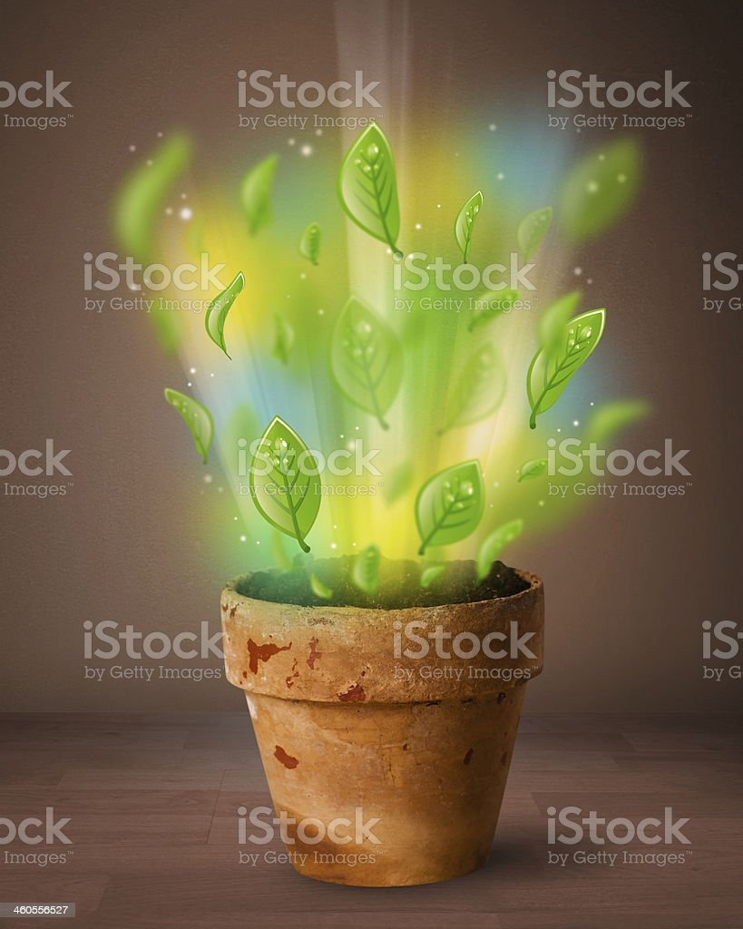 Glowing leaves coming out of flowerpot stock photo