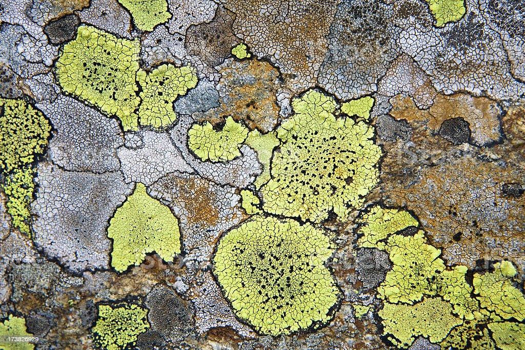 glowing moss stock photo