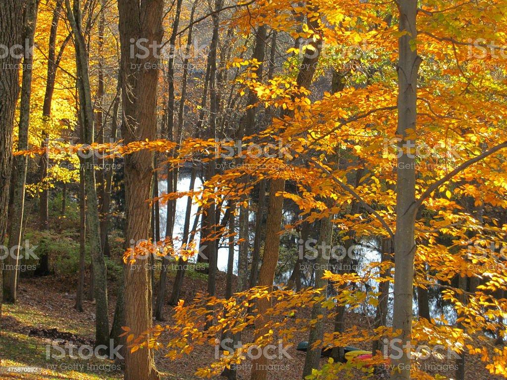 Glowing Orange Trees stock photo