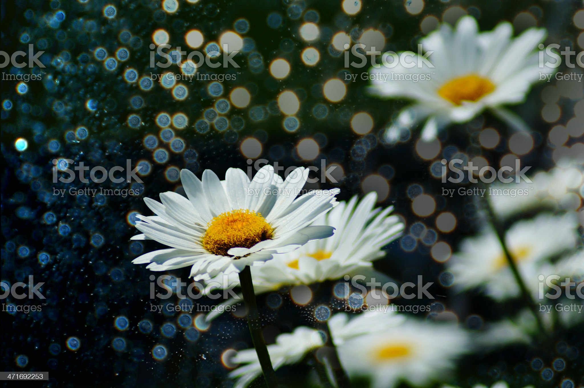 Glowing sparkle background with daisies royalty-free stock photo