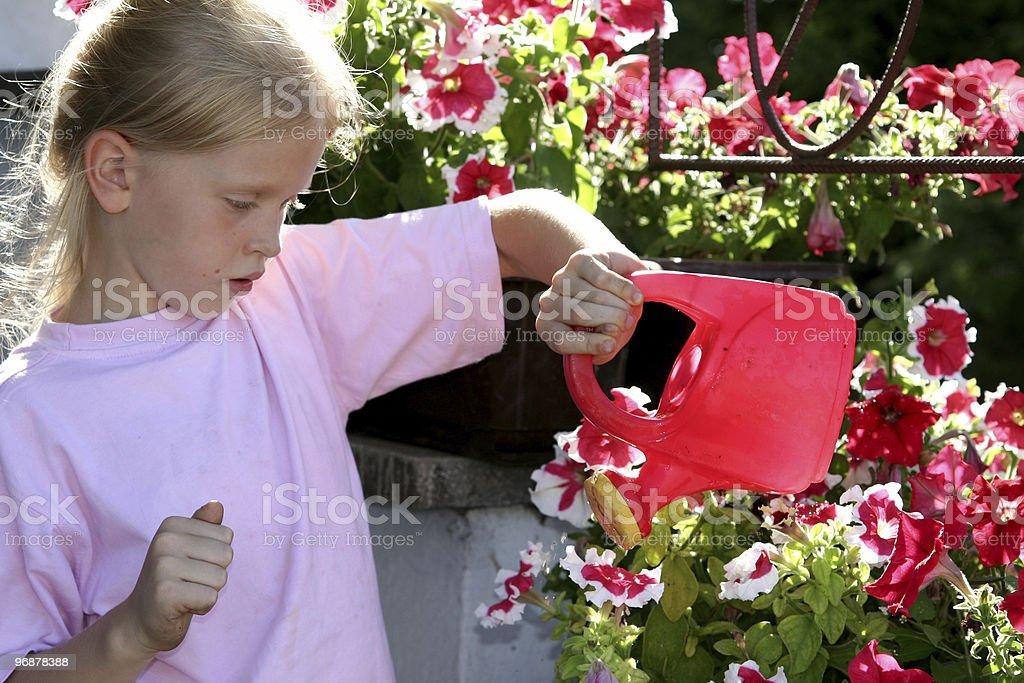 Gloxinia stock photo