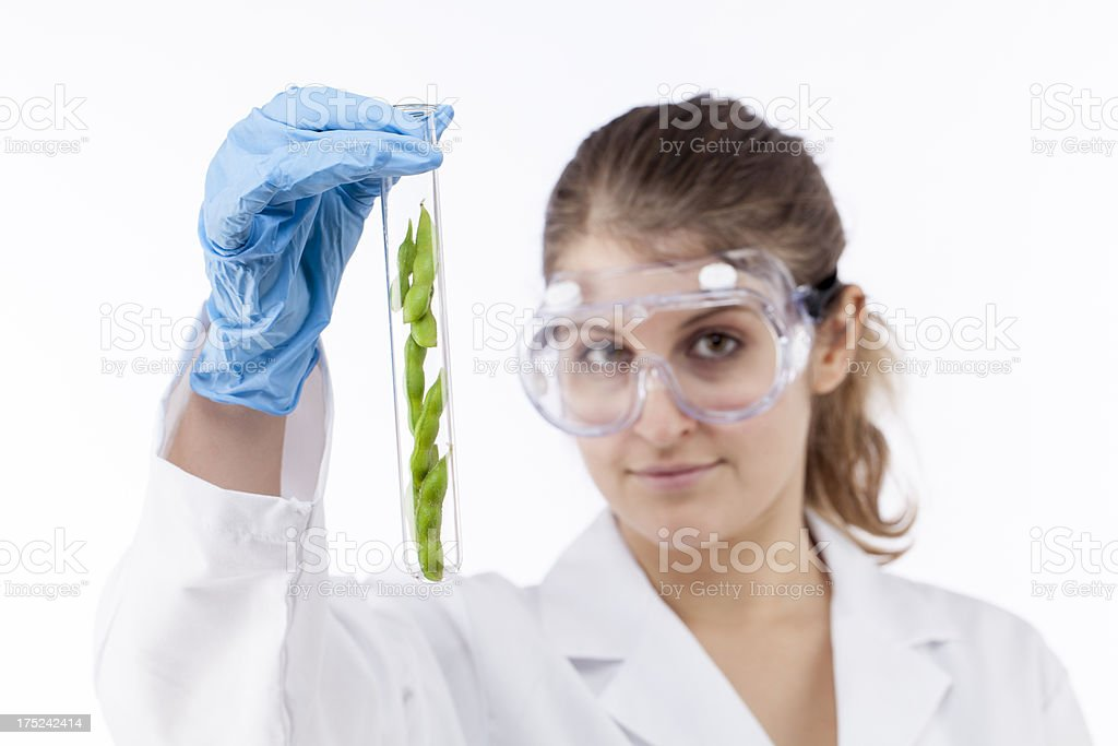gmo soybeans and soy foods royalty-free stock photo