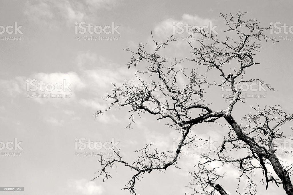 Gnarled tree branch stock photo