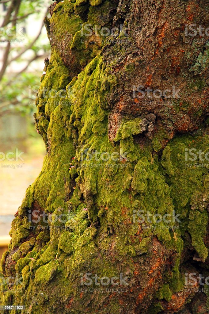 Gnarled Trunk stock photo