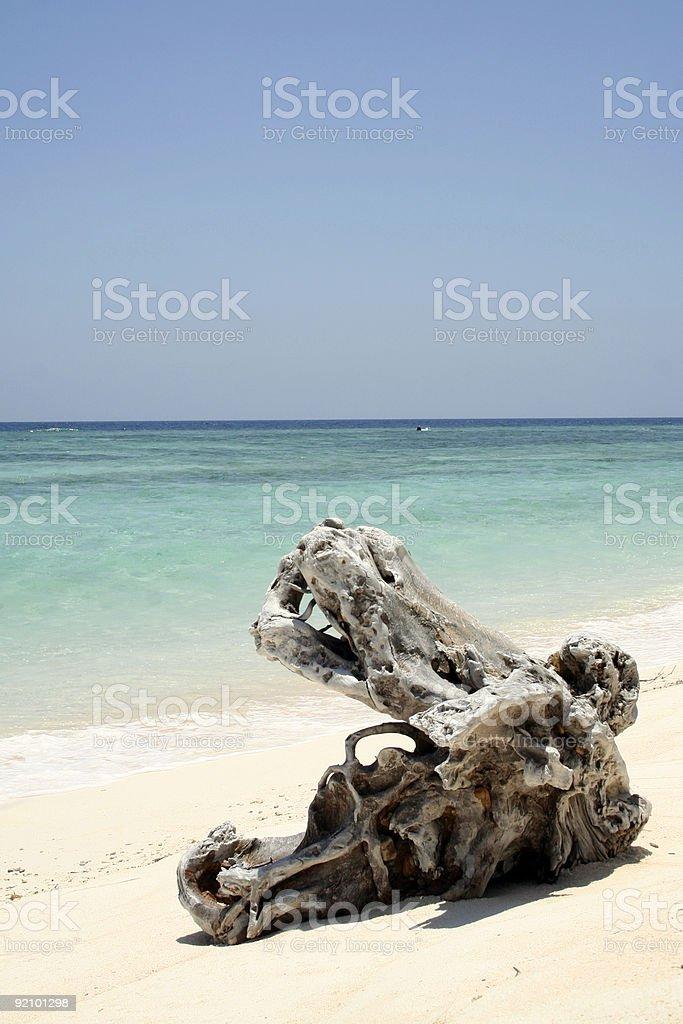 gnarley log on white sand beach royalty-free stock photo