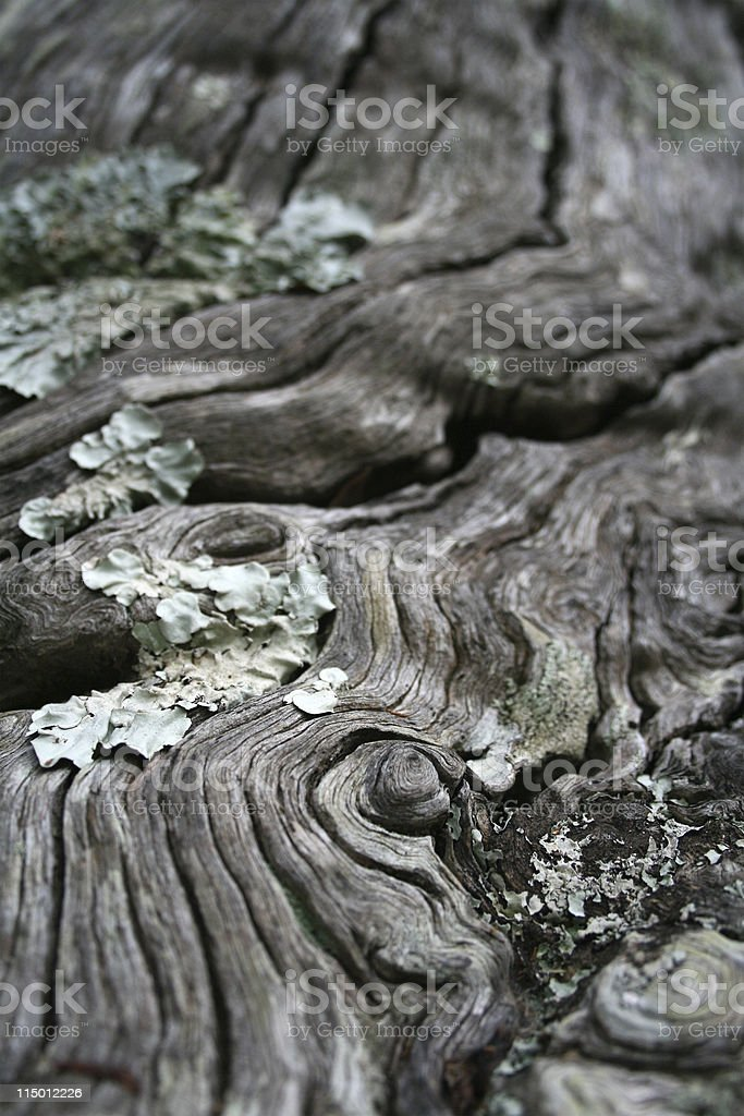 Gnarly old wood royalty-free stock photo