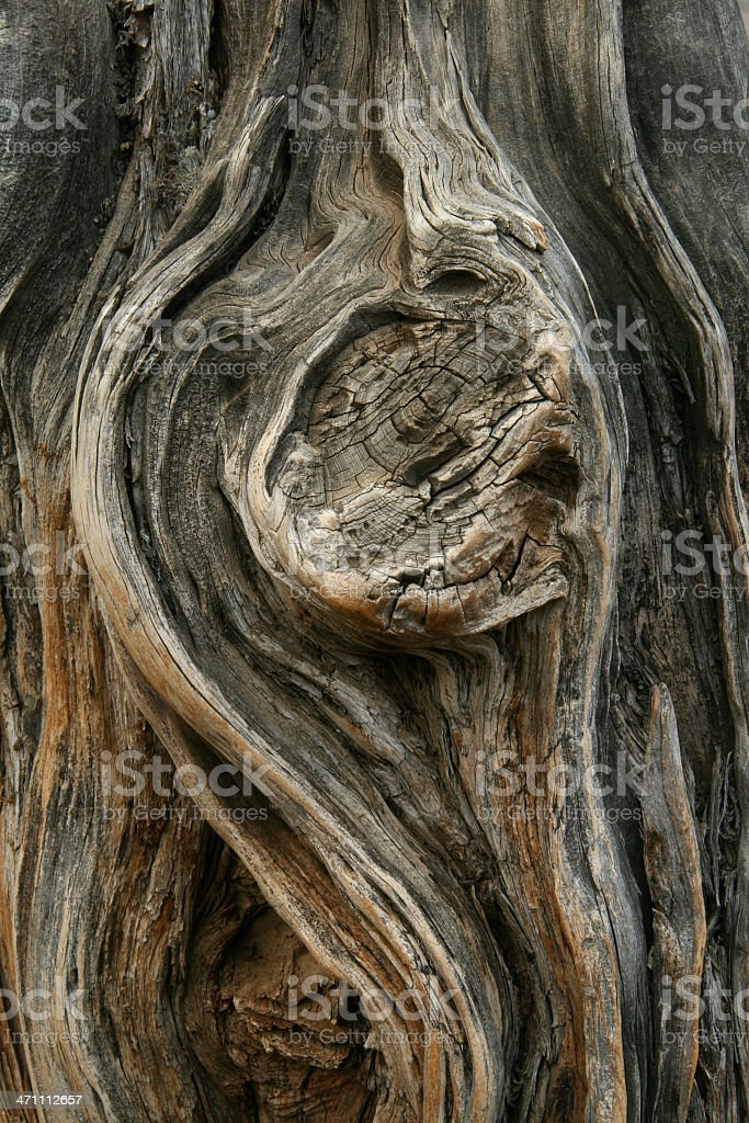 Gnarly Tree royalty-free stock photo