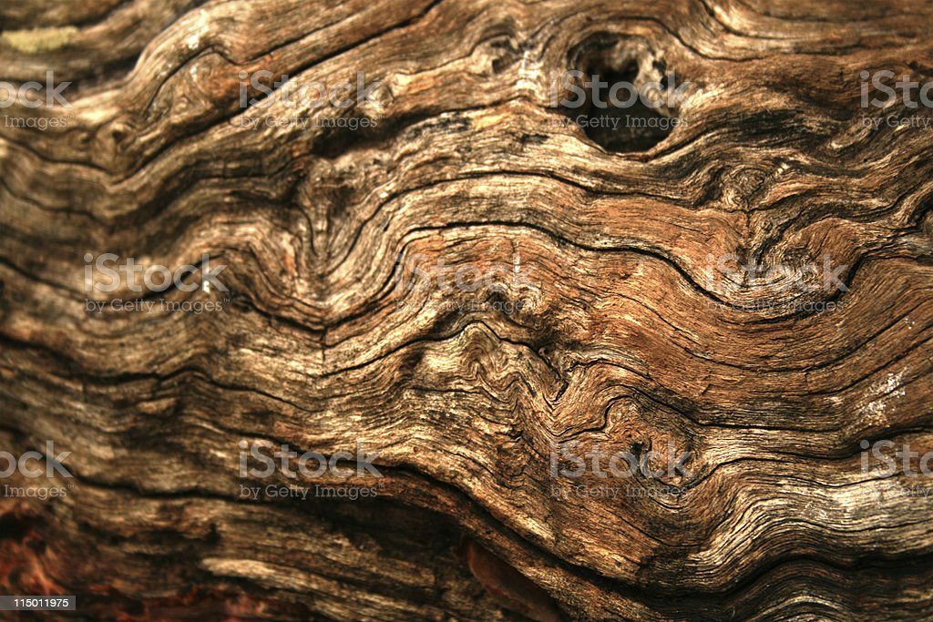 Gnarly wood texture royalty-free stock photo
