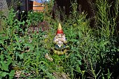 Gnome Disgusted by Overgrown Yard