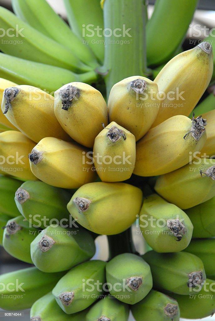 Go bananas royalty-free stock photo